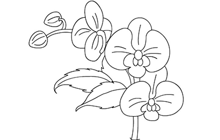 Orchid Flowers Coloring Page