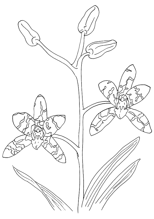 Orchid Flowers Coloring Sheet