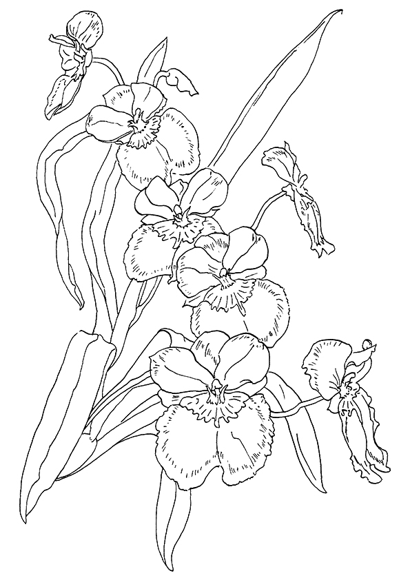 Orchid Flowers Printable Coloring Page