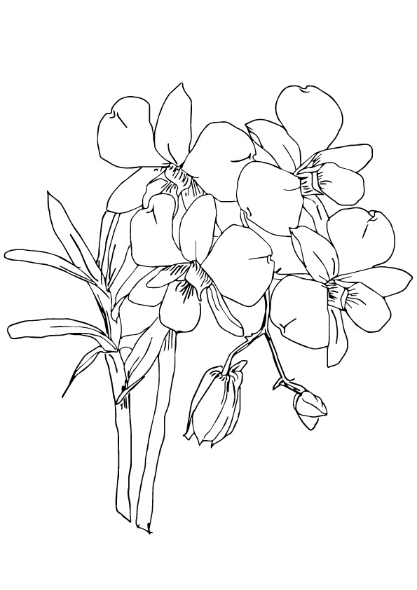 Orchids Coloring Page