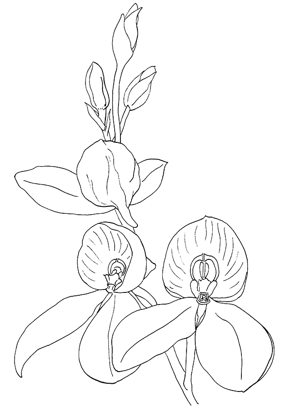 Orchids Coloring Pages