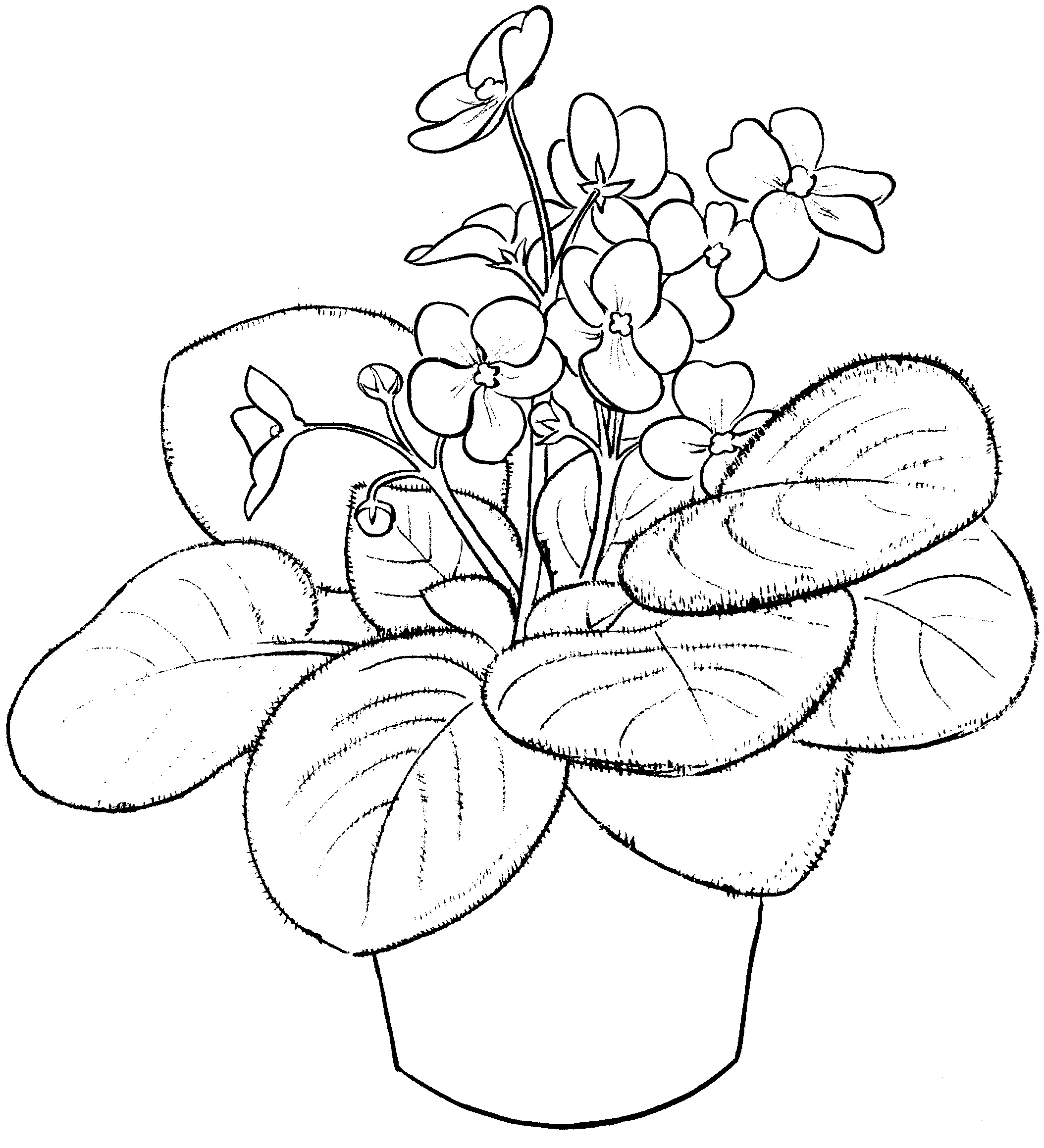 Potted Violet Plant Coloring Pages