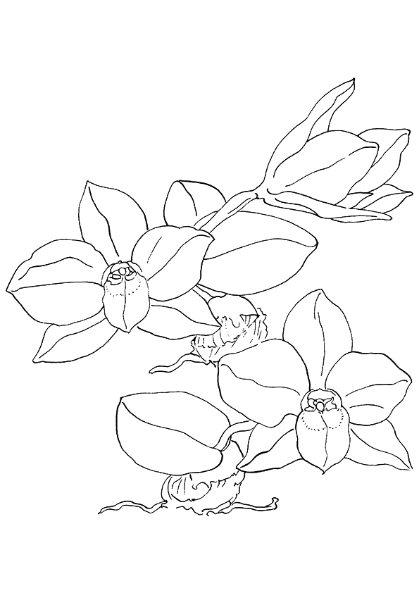 Pretty Orchids Coloring Sheet