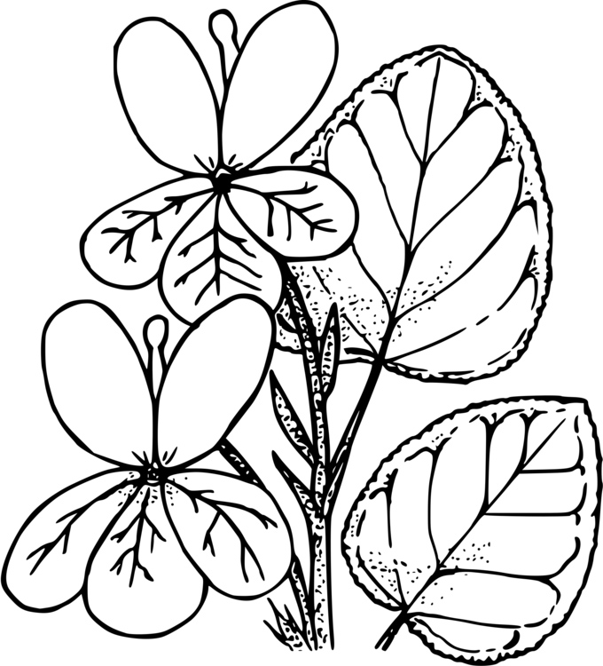 Pretty Violet Coloring Pages