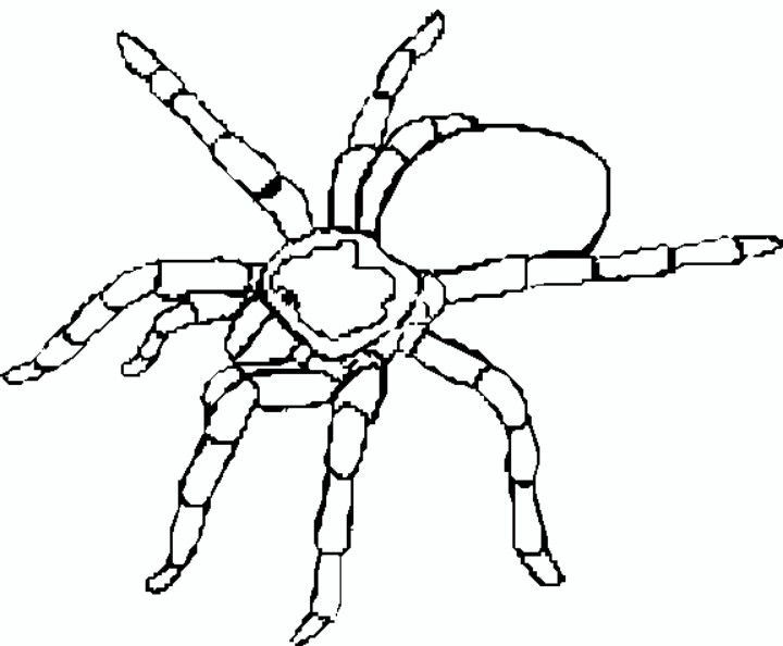 Printable Tarantula Coloring Pages