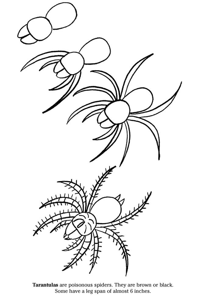 Tarantula Coloring Sheet