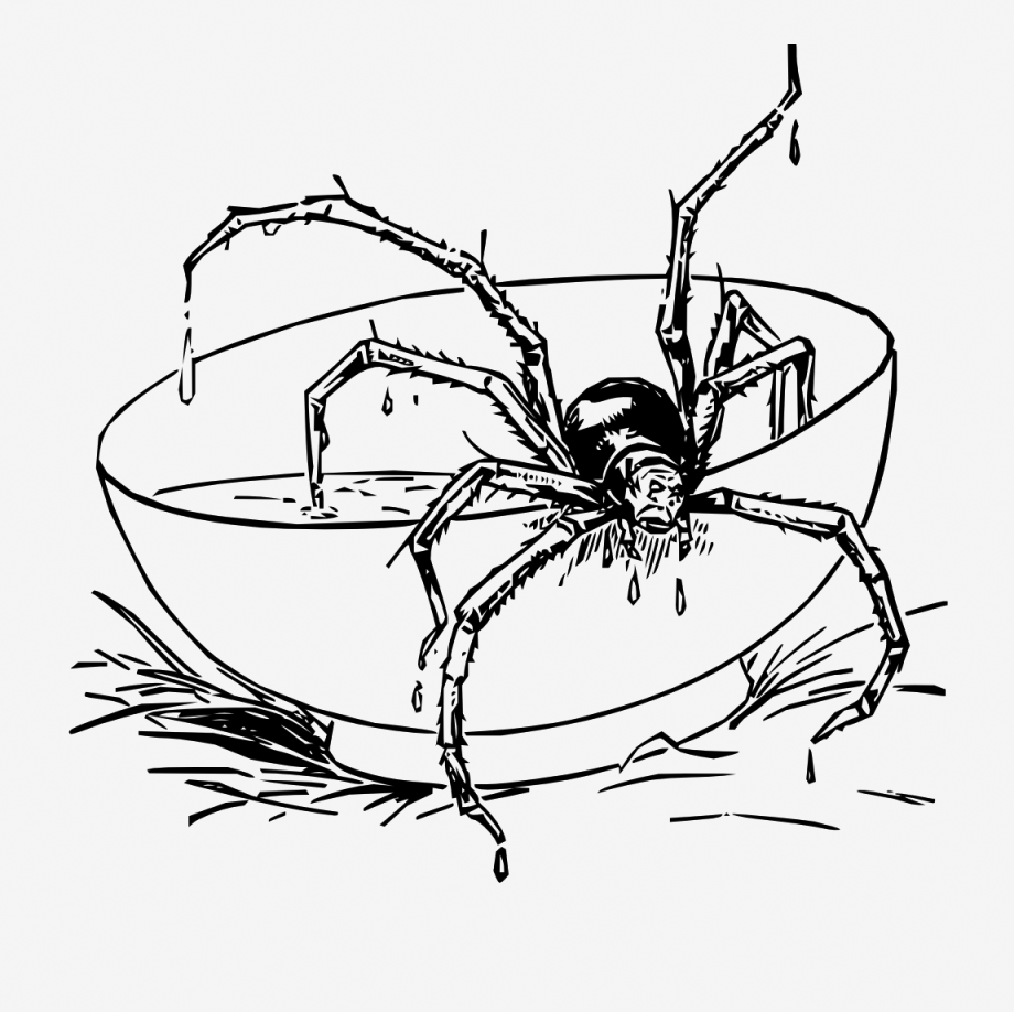Tarantula Spider Coloring Pages
