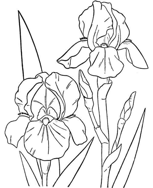 Two Orchids Coloring Page