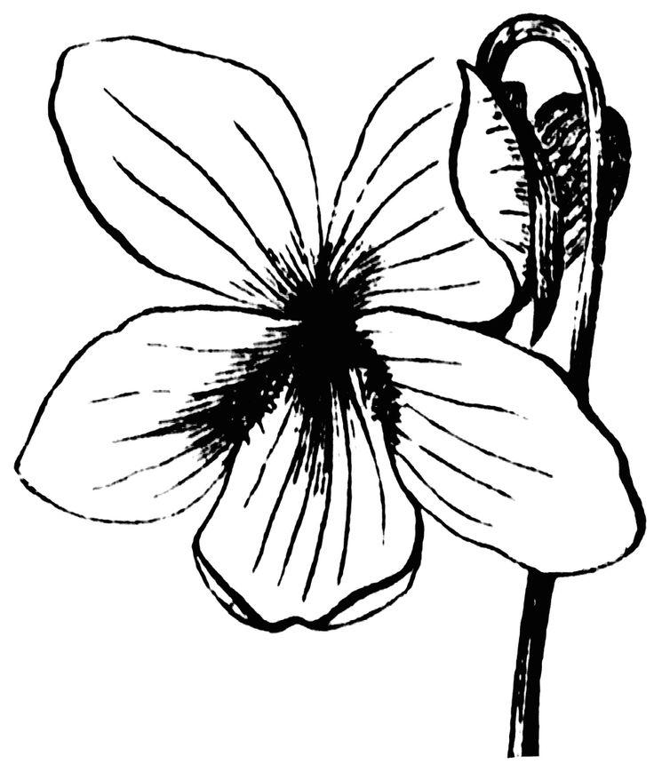 Violet Flower Printable Coloring Page