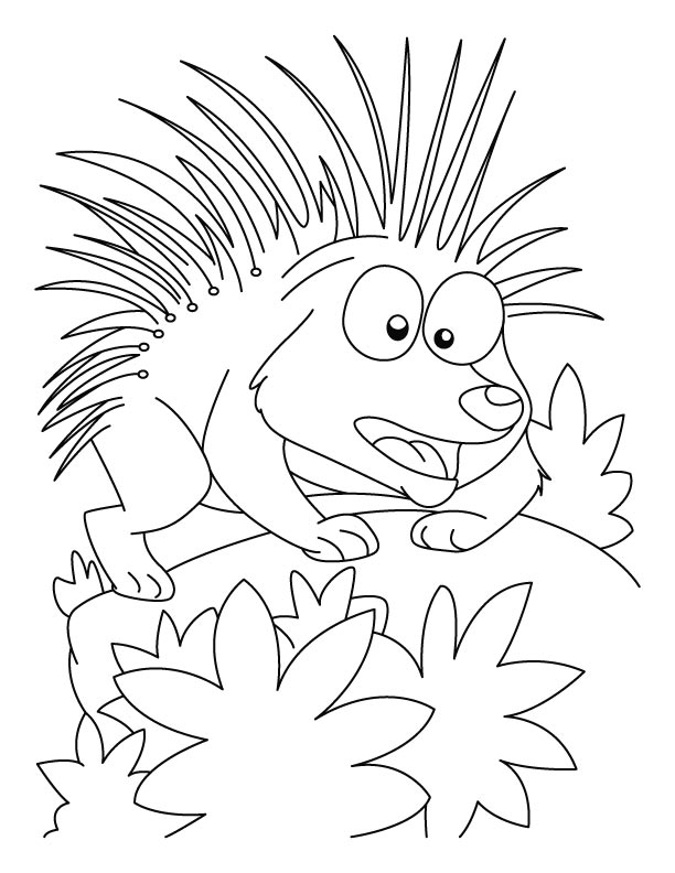 Cartoon Porcupine Coloring Page