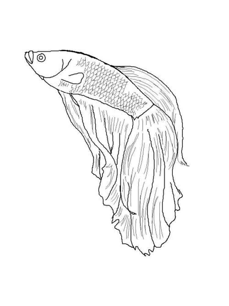 Color Betta Fish