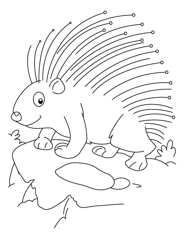 Cute Porcupine Coloring Pages