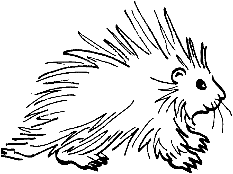 Easy Porcupine Coloring Pages
