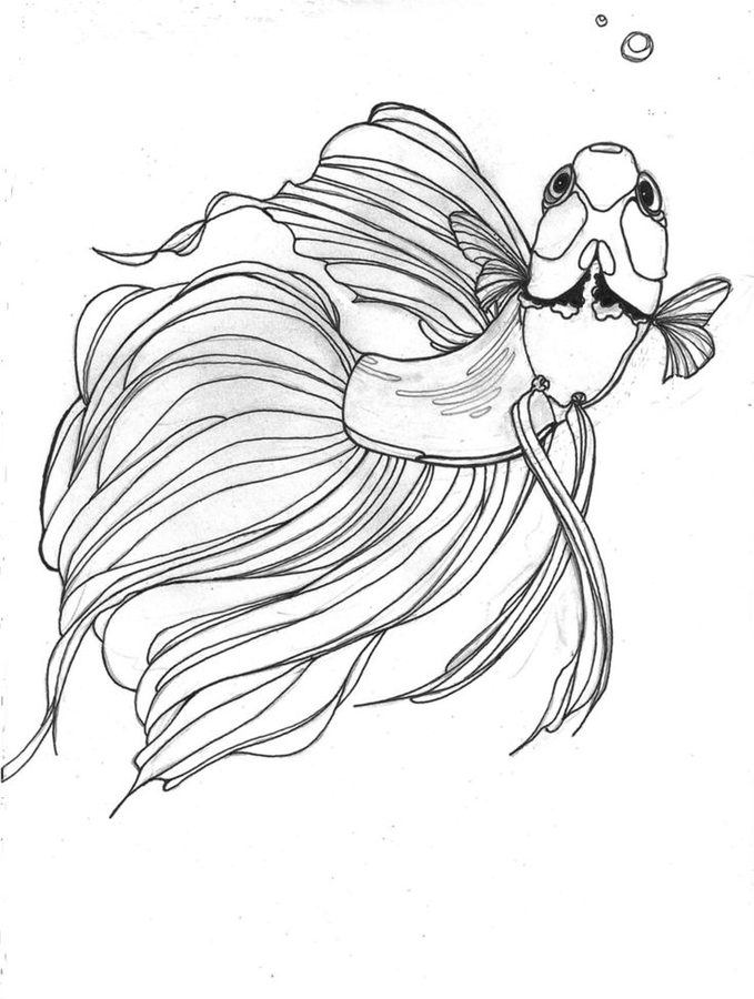 Fancy Betta Fish Coloring Pages