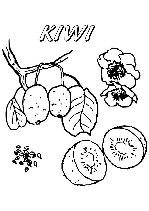 Kiwi Tree Coloring Page