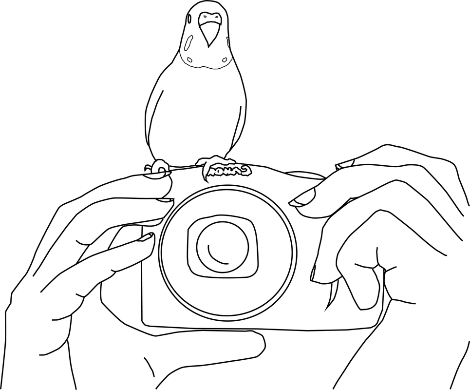 Parakeet Photo Coloring Page