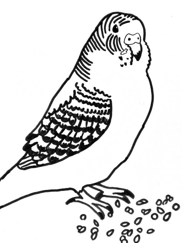 Parakeet Printable Coloring Pages