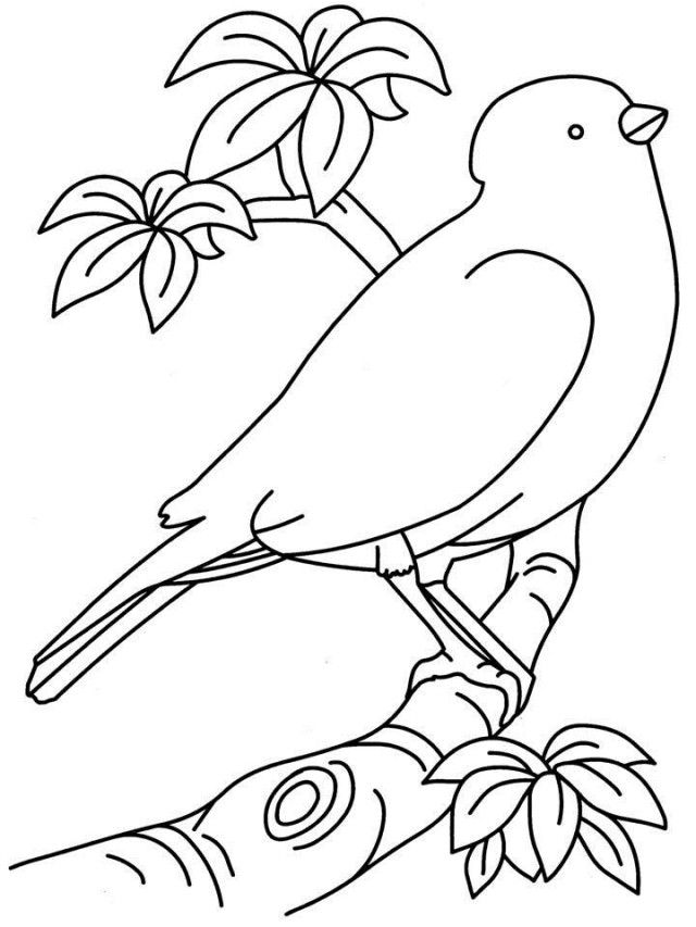 Parakeet In A Tree Coloring Page
