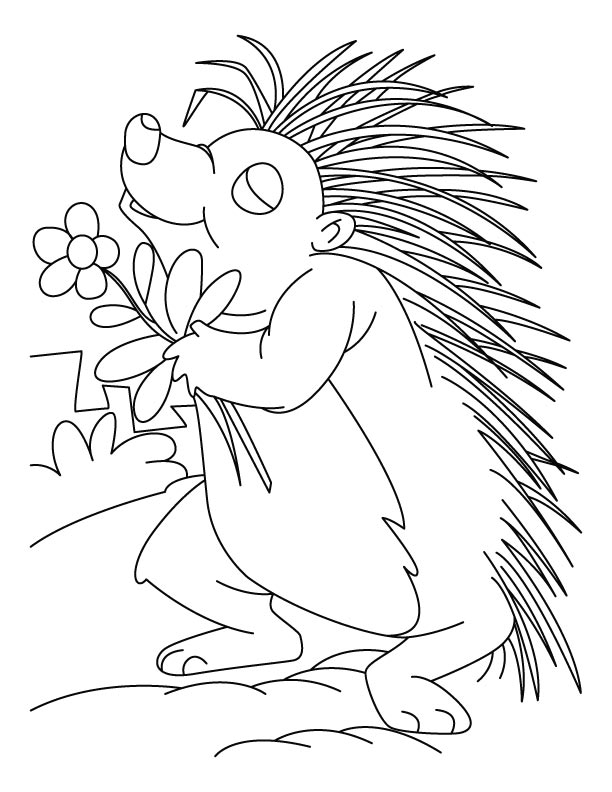 Porcupine Printable Coloring Pages