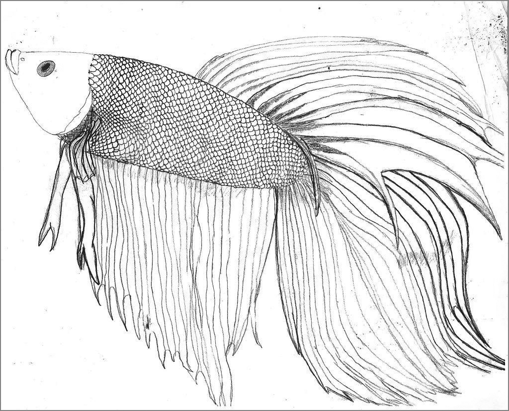 Printable Betta Fish Coloring Pages