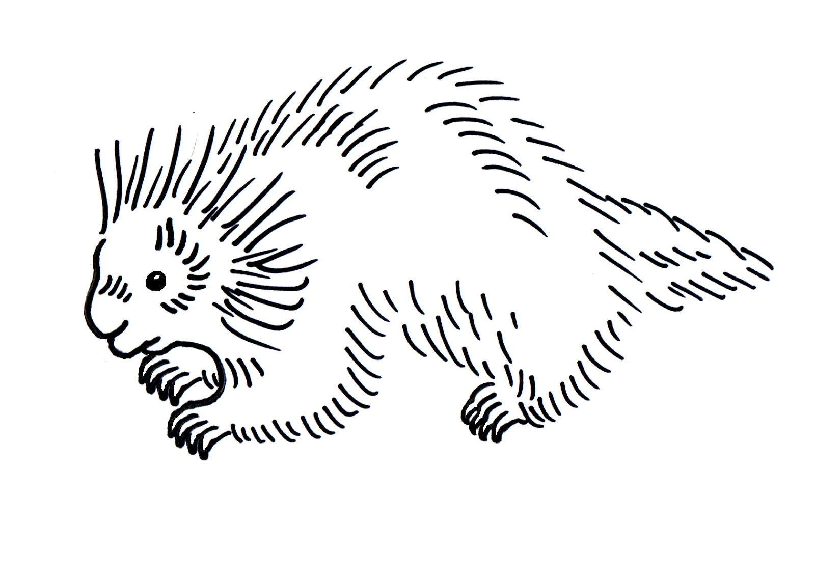 Printable Porcupine Coloring Pages