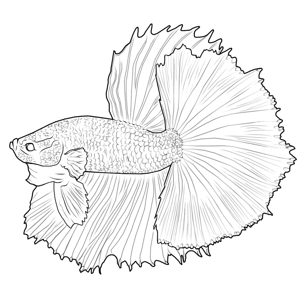 Realistic Betta Fish Coloring Page