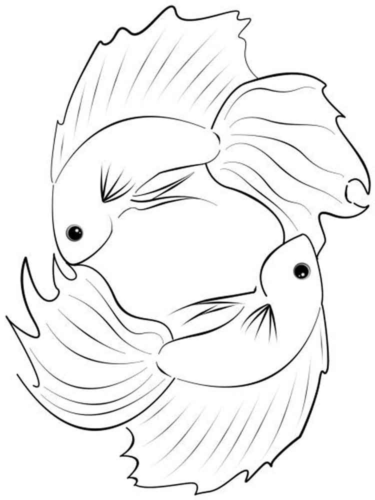 Betta Fish Coloring Pages Fresh Betta Fish Printable Coloring Pa