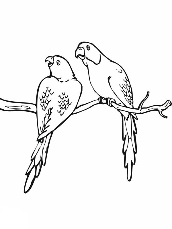Two Parakeets On A Branch Coloring Page