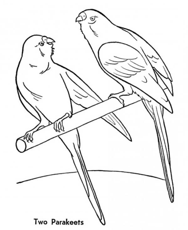 Two Parakeets On A Perch Coloring Page