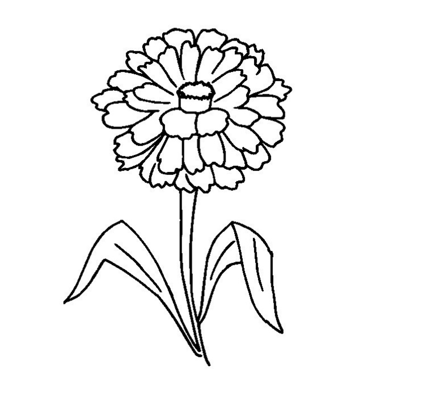 Easy Zinnia Coloring Pages