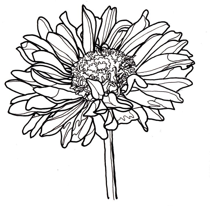 Single Zinnia Coloring Page