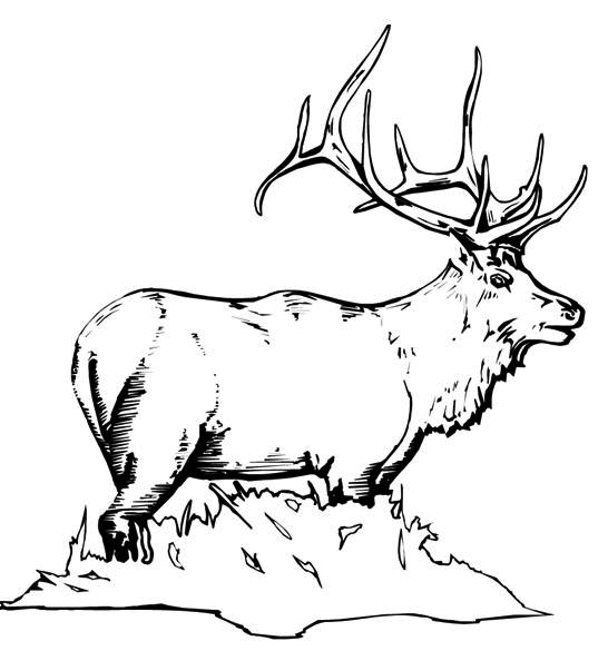 Wild Elk Coloring Pages