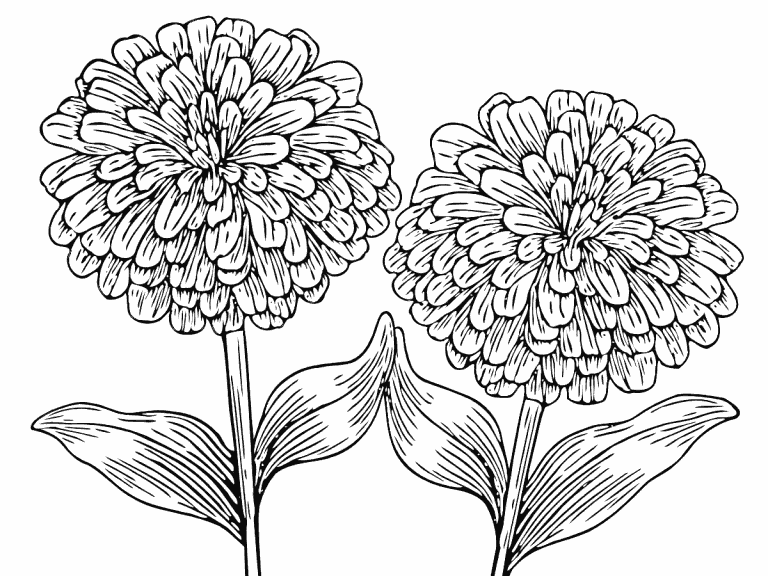 Zinnias Coloring Pages
