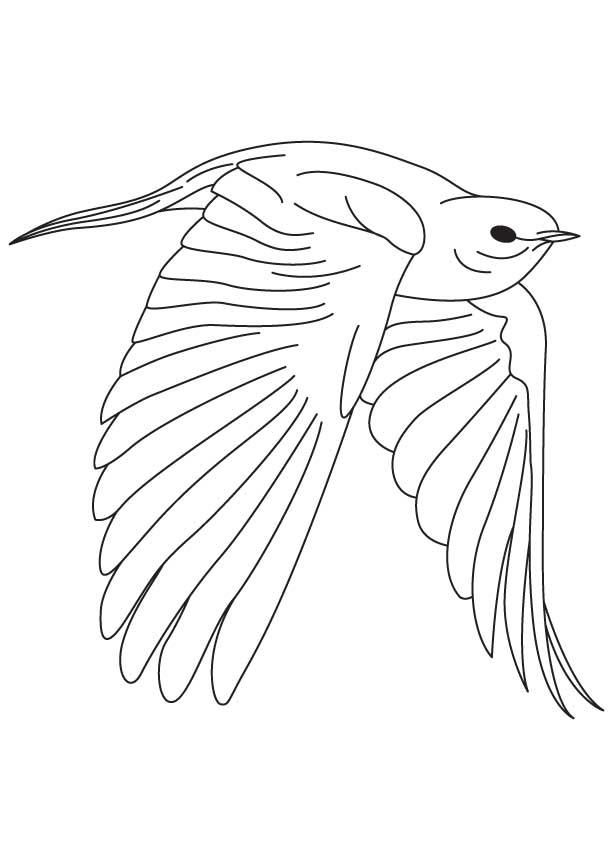 Bluebird Printable Coloring Page