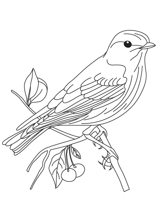 Bluebird On Perch Coloring Pages