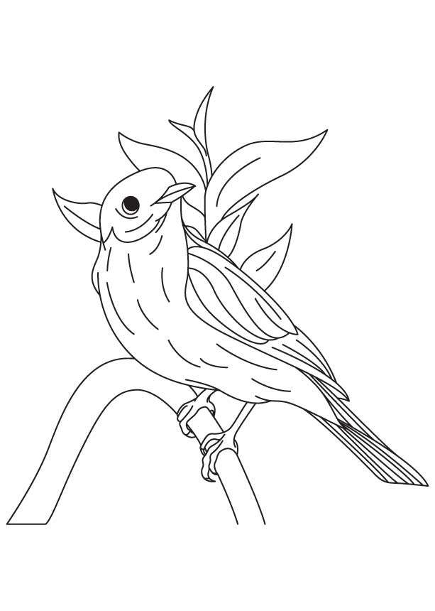 Simple Bluebird Coloring Pages