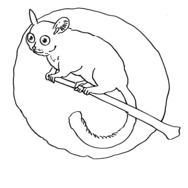 Lemur In The Moon Coloring Page