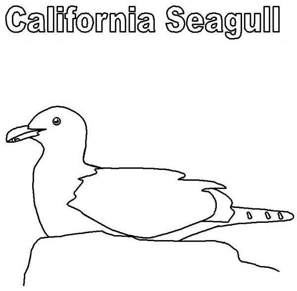 California Seagull Coloring Pages