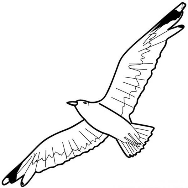 Flying Seagull Coloring Pages