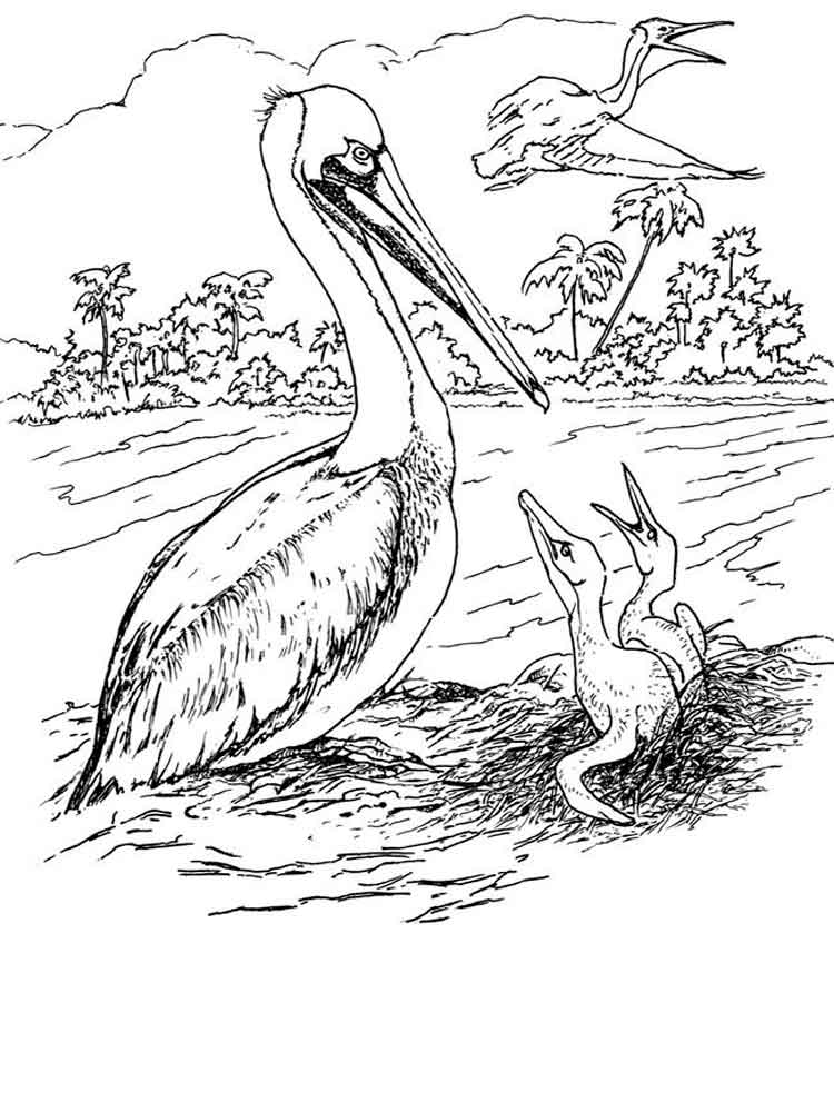 Mother Pelican Coloring Page