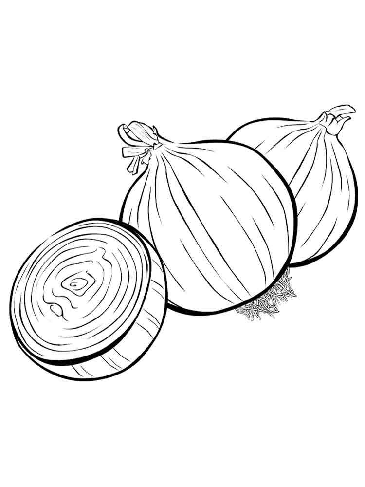 Onions Coloring Page