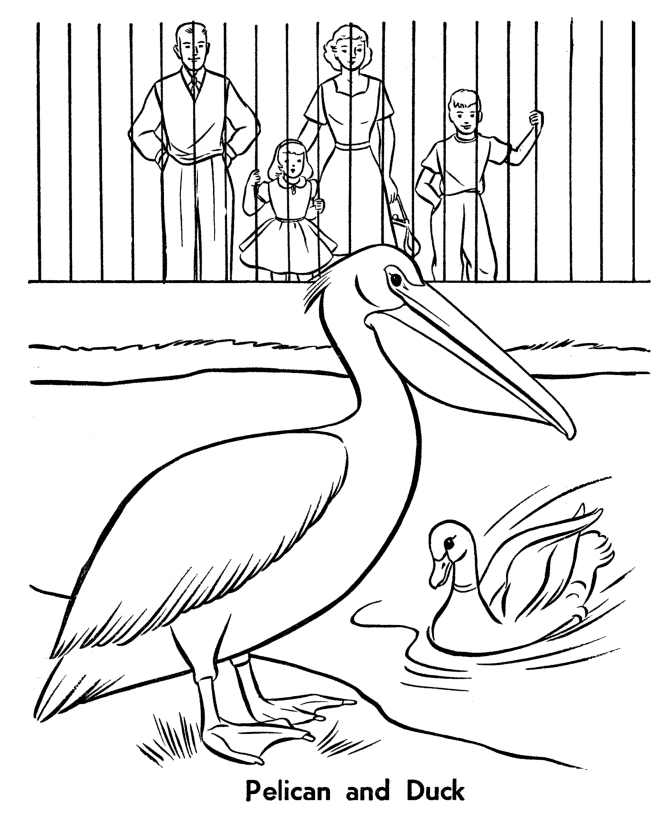 Pelican And Duck Coloring Page