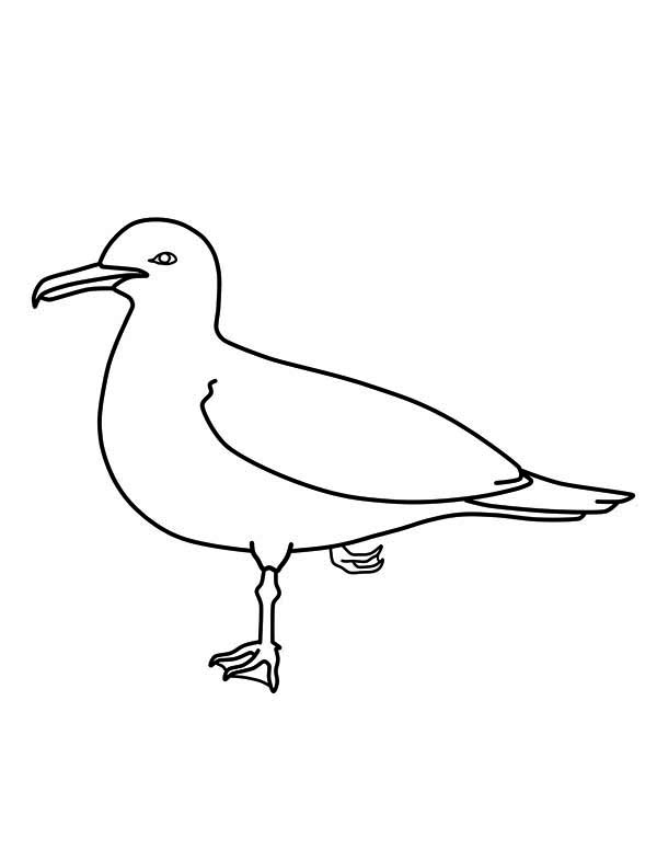 Seagull Coloring Pages
