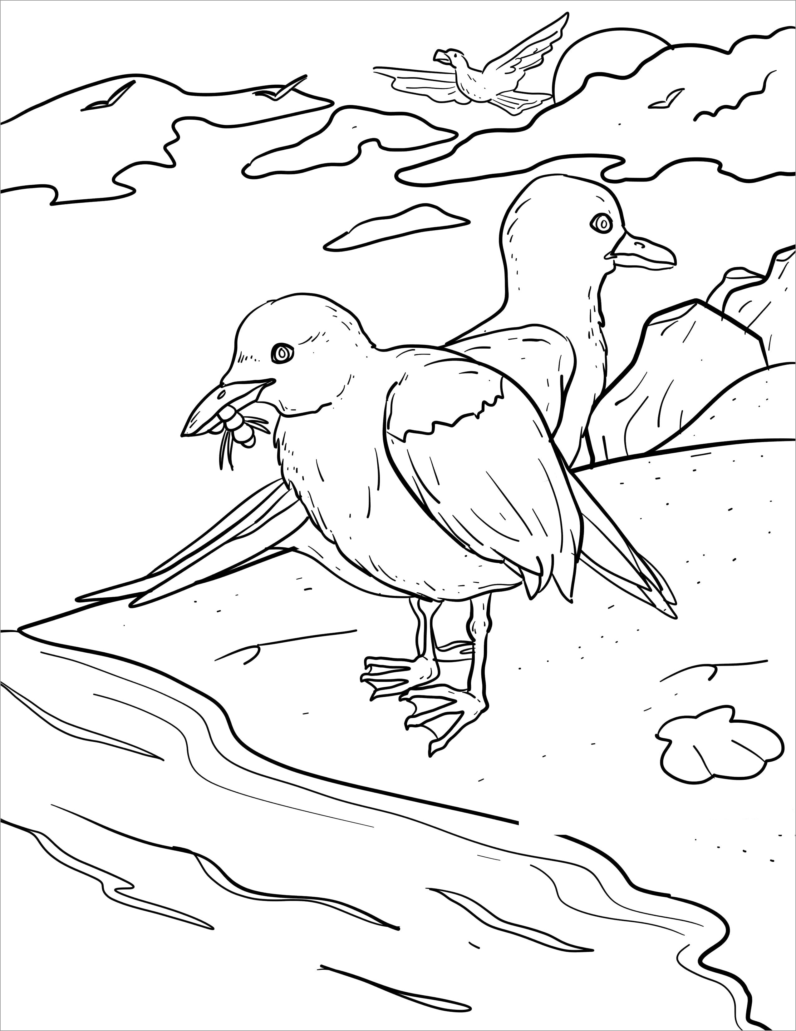 Seagull Eating Coloring Page