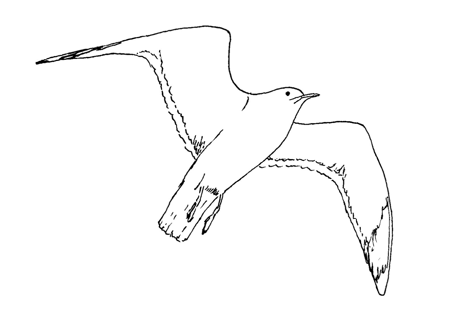 Seagull In Flight Coloring Page