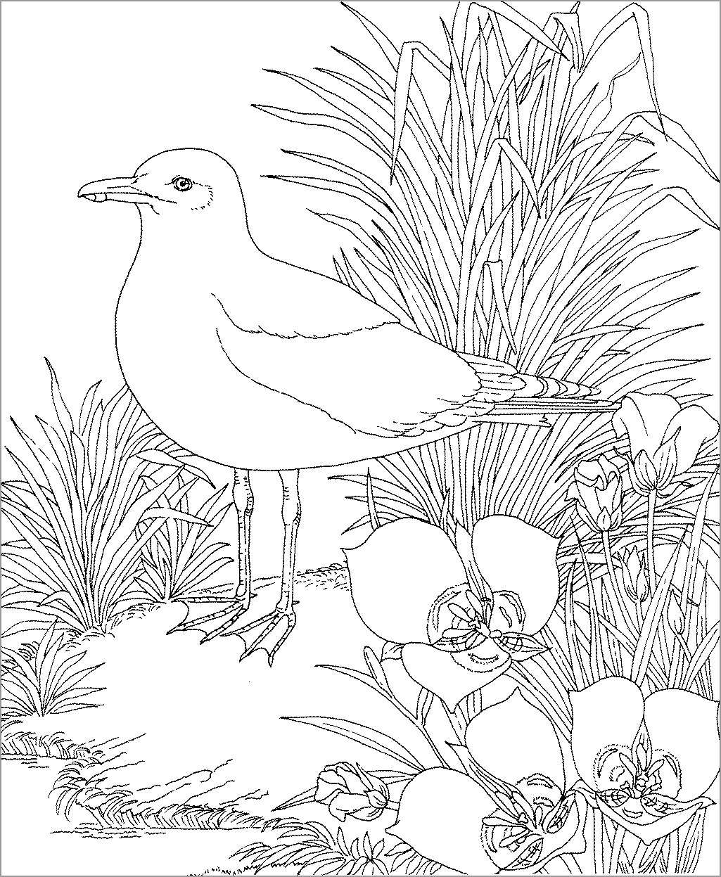 Seagull In The Foliage Coloring Page