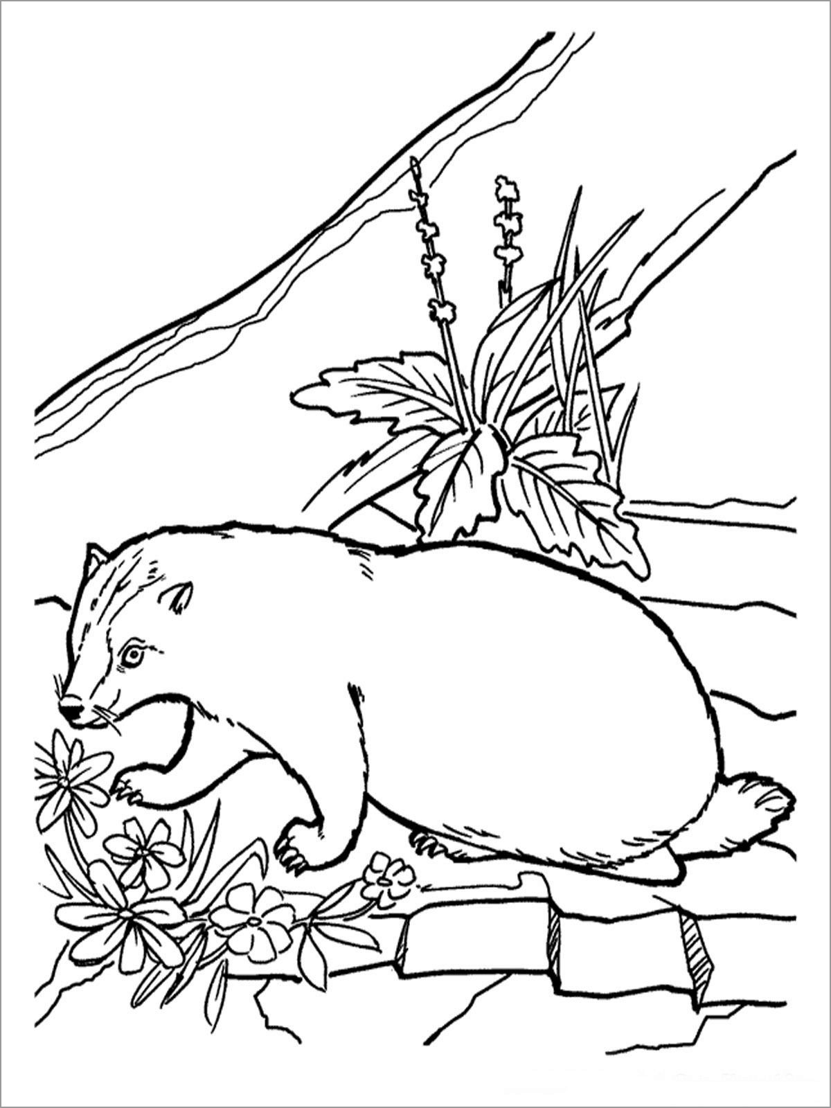 Badger And Flowers Coloring Pages