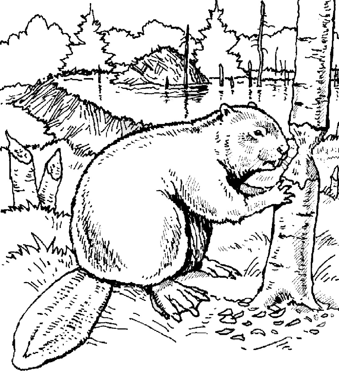 Beaver Chewing Tree Coloring Page