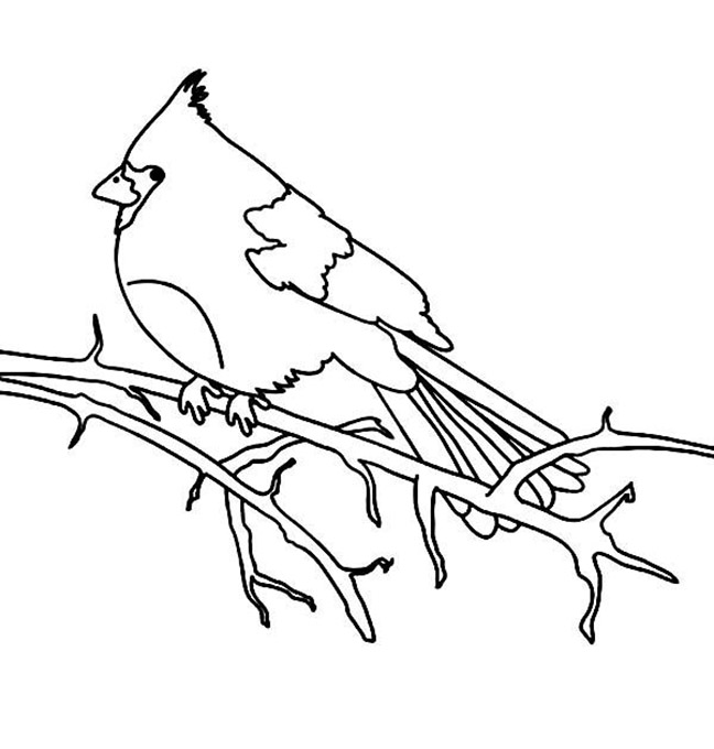 Cardinal In Tree Coloring Pages