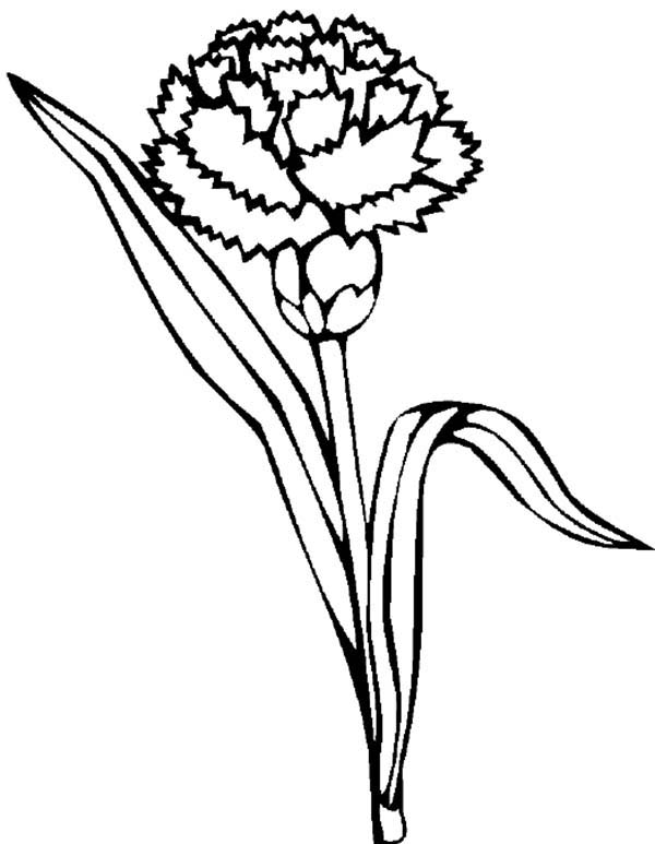Carnation Coloring Pages